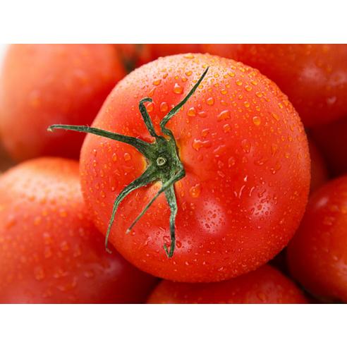 GAP 인증 완숙 토마토